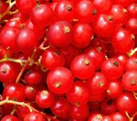 cranberry detox